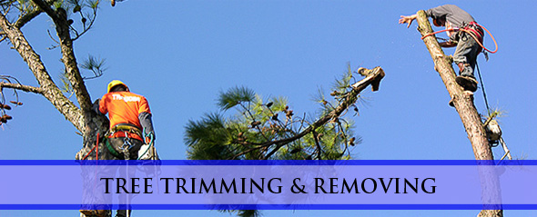 SEO for Tree Removal Website, SEO Services Tree Cutting & Trimming Services